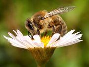 пчелочка, обустройство пасеки, устройство пасеки, пчёлка