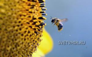 пчелочка, обустройство пасеки, устройство пасеки, пчёлка, Свет в мир, светвмир