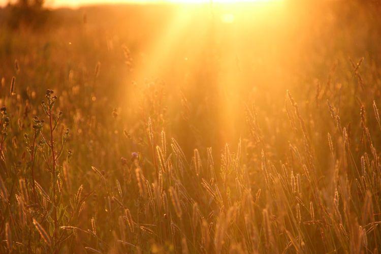 Молитва Анастасии к Богу, отрывок из Звенящих кедров России