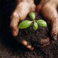 Как восстановить плодородие почвы