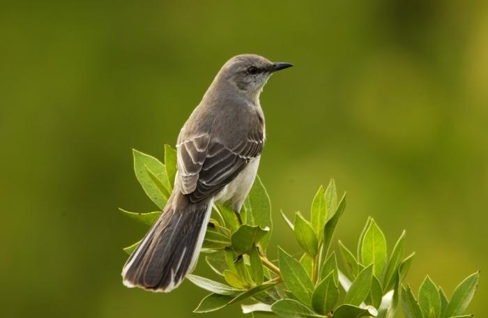 Лечение пением птиц (4 аудиофайла)