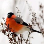 лечение пением птиц