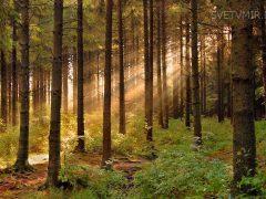 Лес – что ЭТО на самом деле (цитата из Звенящих кедров России)