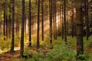Лес - что ЭТО на самом деле