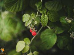 """""""То общество, в котором ты живёшь, многое может понять через общение с растениями"""""""