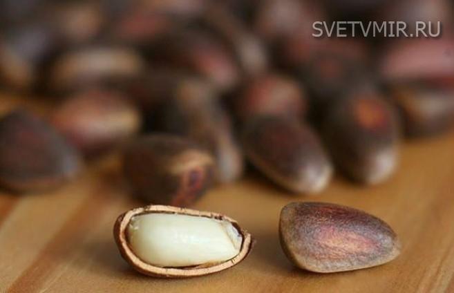 Лечение скорлупой кедрового ореха