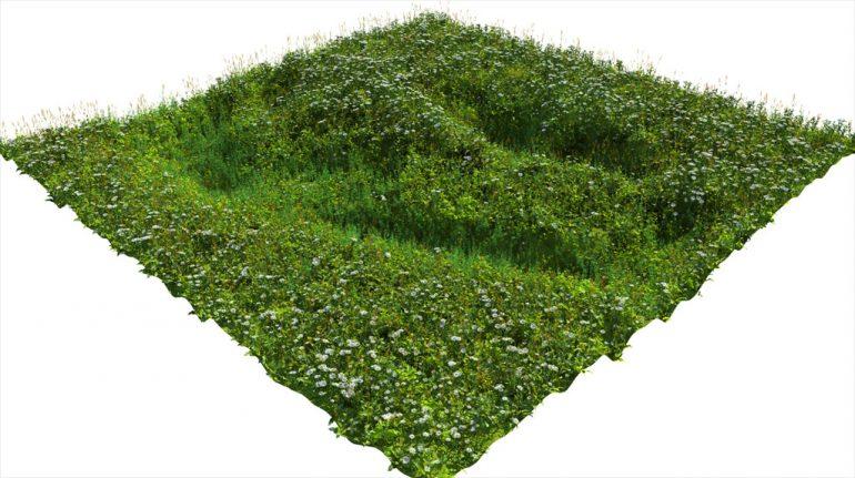 vegetation-20wip2