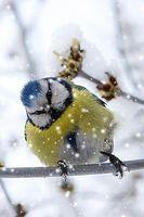 Когда поют птицы – болезни уходят (5 аудиофайлов с пением птиц)