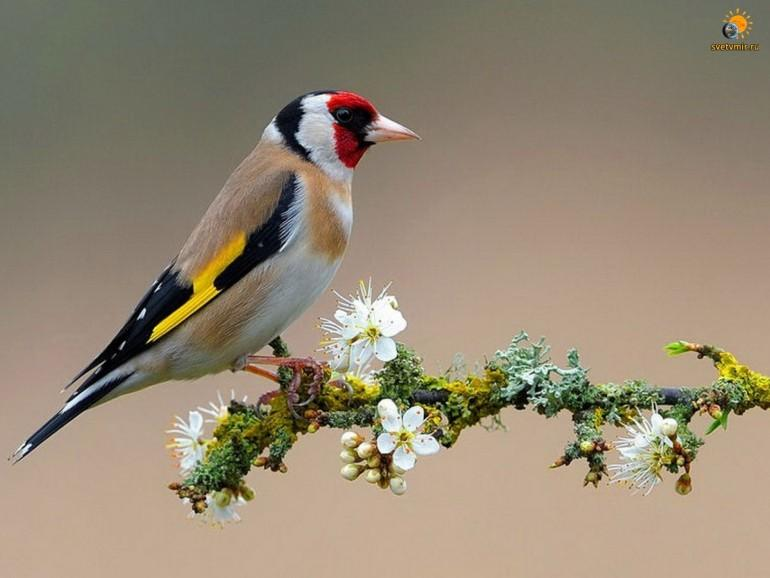 Когда поют птицы – болезни уходят (6 аудиофайлов с пением птиц)