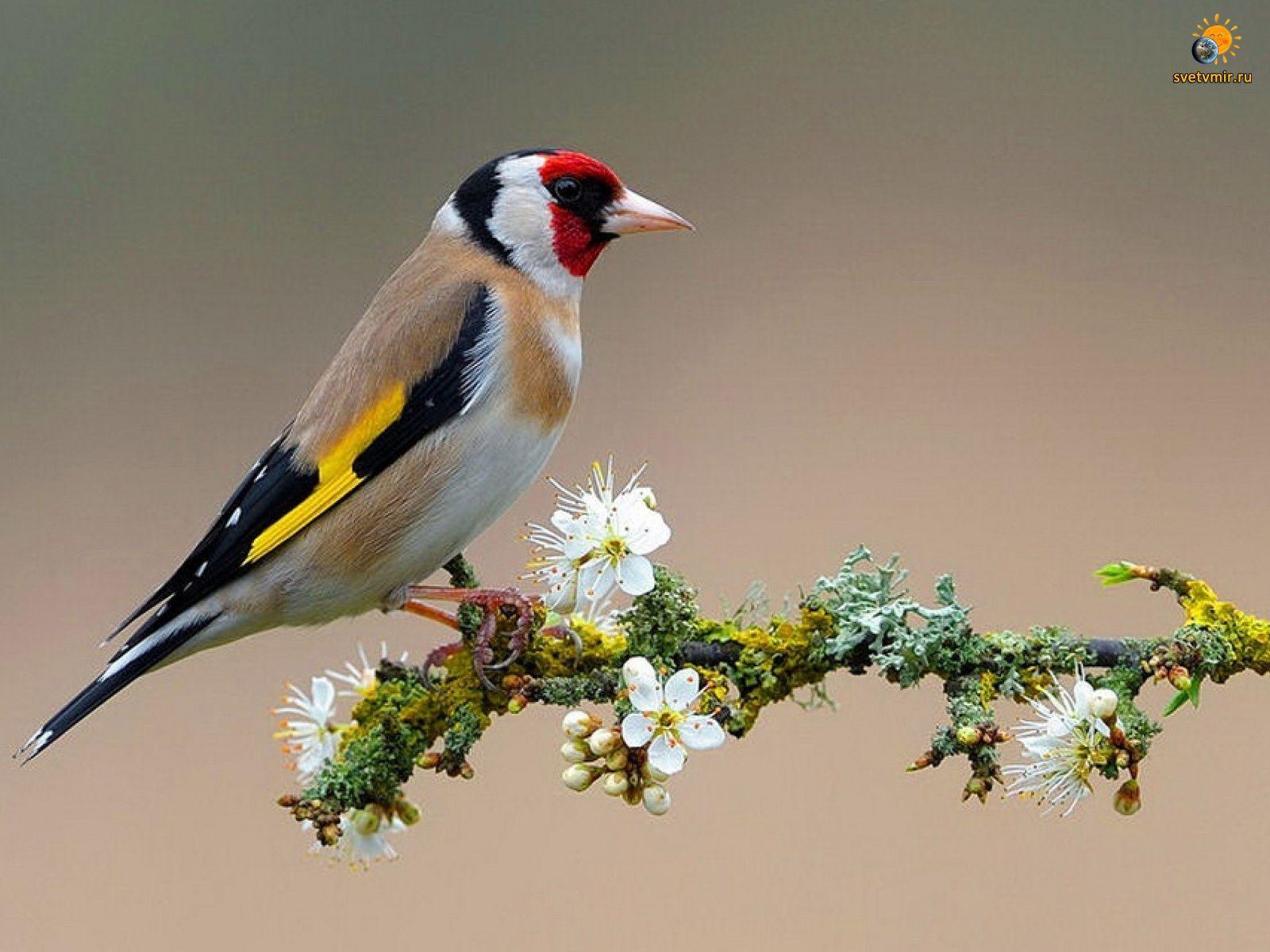 Орнитотерапия лечение пением птиц