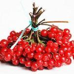 Калина - лечебные рецепты, пастила, варенье, желе