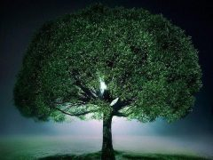 Посадил дерево – молодец. Показал ребёнку – спас планету