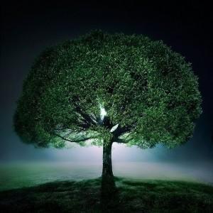 Посадил дерево - молодец. Показал ребёнку - спас планету