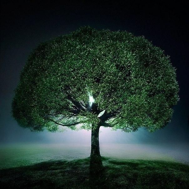 Посадил с сыном дерево - спас планету?