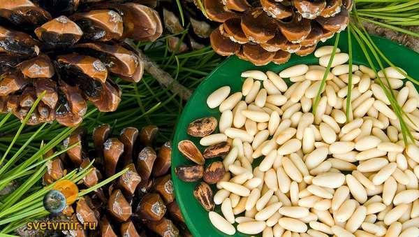 Очистка организма с помощью кедровых орехов