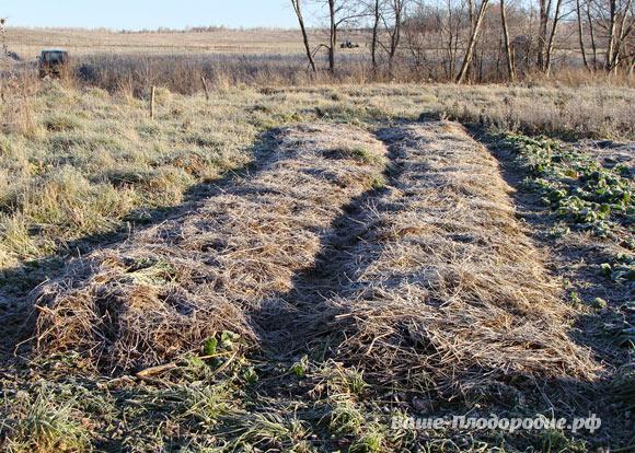 Природное земледелие в родовом поместье