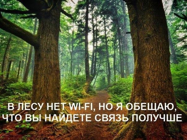 В лесу нет wi-fi, но я обещаю, вы найдёте связь получше