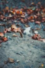 DSC04907 - СветВМир.ру | Познавательный журнал! - Путешествие по побережью Чёрного моря или Чаша любви, гора Ёжик, скала Парус и ванна Афродиты