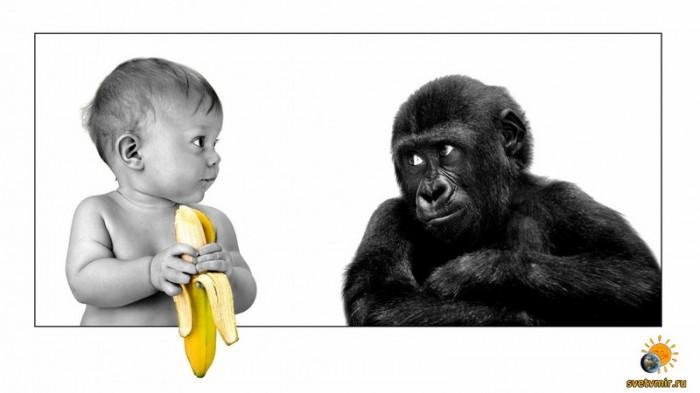 Множество доказательств о пользе вегетарианства или 21 миф о вегетарианстве
