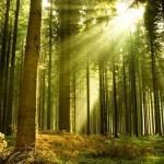 Что восстановит планету?