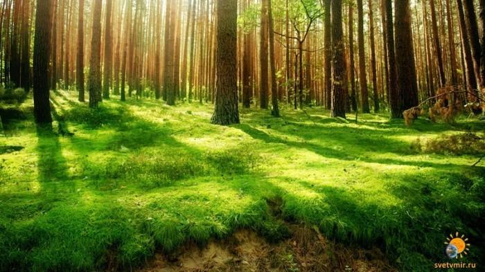 gandex.ru-26_6417_summer-forest