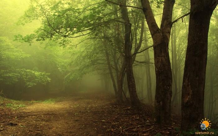 красивые-картинки-лес-Природа-туман-643815