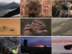 Дикая природа России (6 серий из 6) | Качество HD 720p, National Geographic