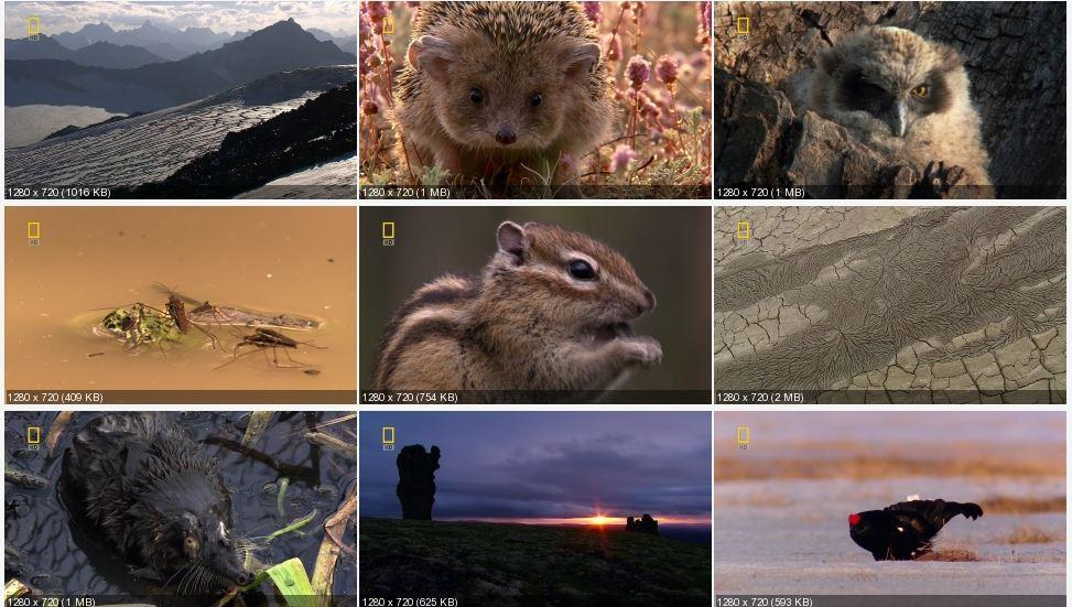 Дикая природа России (6 серий из 6)   Качество HD 720p, National Geographic