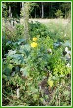 10LMR1qnaO0 - СветВМир.ру - Интересный познавательный журнал. Развитие познания - Не тяжело ли работать на гектаре?