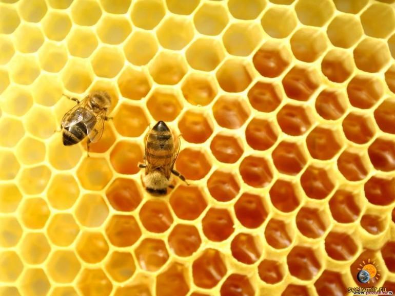 Что такое мёд и откуда он берётся?