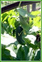 4FqTzZ424Hc - СветВМир.ру - Интересный познавательный журнал. Развитие познания - Не тяжело ли работать на гектаре?