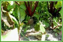 4dF67GHGVk0 - СветВМир.ру - Интересный познавательный журнал. Развитие познания - Не тяжело ли работать на гектаре?