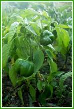 8cGOCQ95i24 - СветВМир.ру - Интересный познавательный журнал. Развитие познания - Не тяжело ли работать на гектаре?