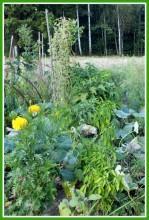 A baUdFg8k - СветВМир.ру - Интересный познавательный журнал. Развитие познания - Не тяжело ли работать на гектаре?