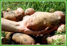 Cp7Cd8NkgGU - СветВМир.ру - Интересный познавательный журнал. Развитие познания - Не тяжело ли работать на гектаре?