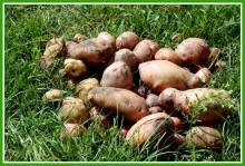 k1PS81puwP0 - СветВМир.ру - Интересный познавательный журнал. Развитие познания - Не тяжело ли работать на гектаре?