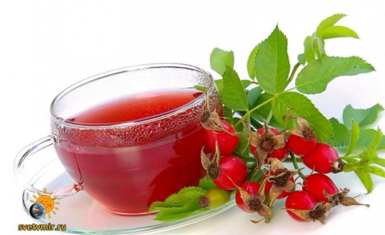 Напитки и отвары из дикорастущих растений