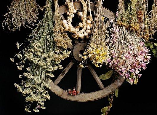 Когда собирать лекарственные растения и травы? | Календарь сбора лекарственных трав и растений