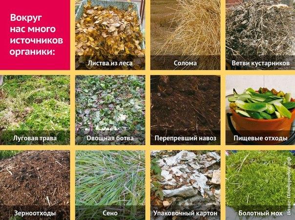 j aKWLainKY - СветВМир.ру | Познавательный журнал! - Почему природа не покупает удобрения в магазине