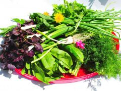 Переработка и хранение растений