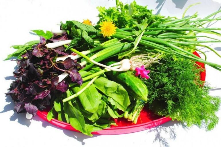 Переработка и хранение дикорастущих и домашних растений