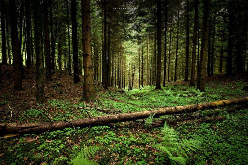 Into The Forest by DREAMCA7CHER - СветВМир.ру - Интересный познавательный журнал. Развитие познания - На нашей планете исчезают леса: почему и чем грозит человечеству?