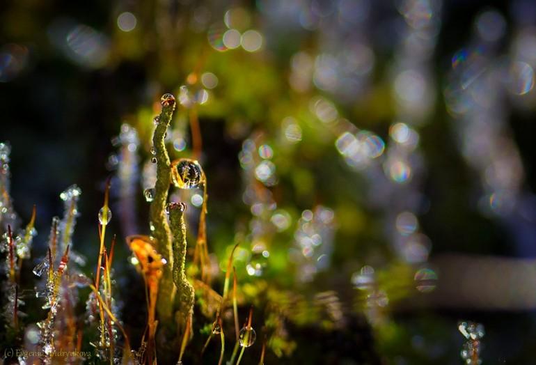 Добро, как чистый воздух на земле Не может быть излишним и напрасным... Дарите, станет мир вокруг светлей От радости подаренного счастья...