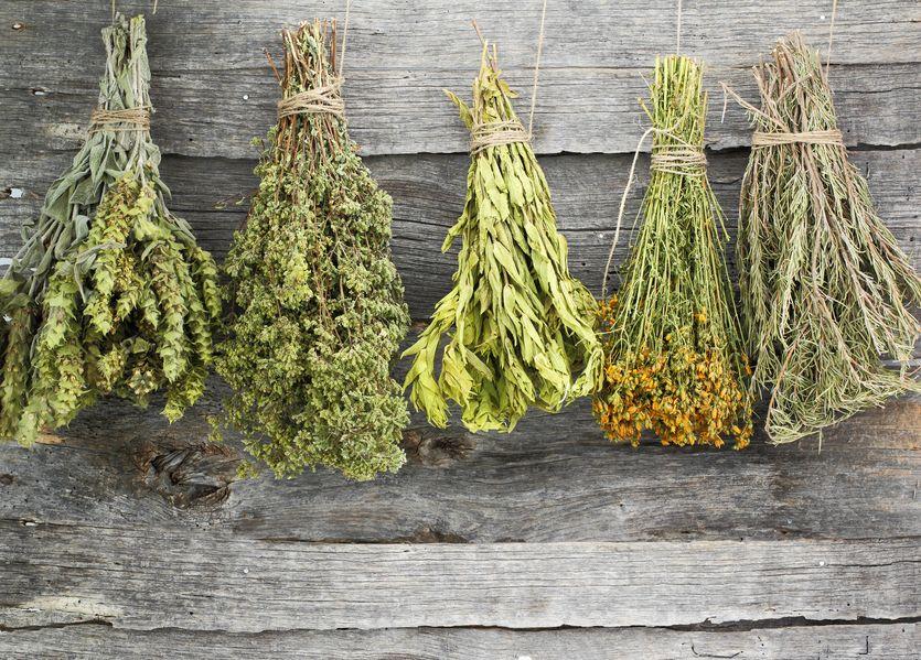 Лекарственные (лечебные) травы: противопоказания
