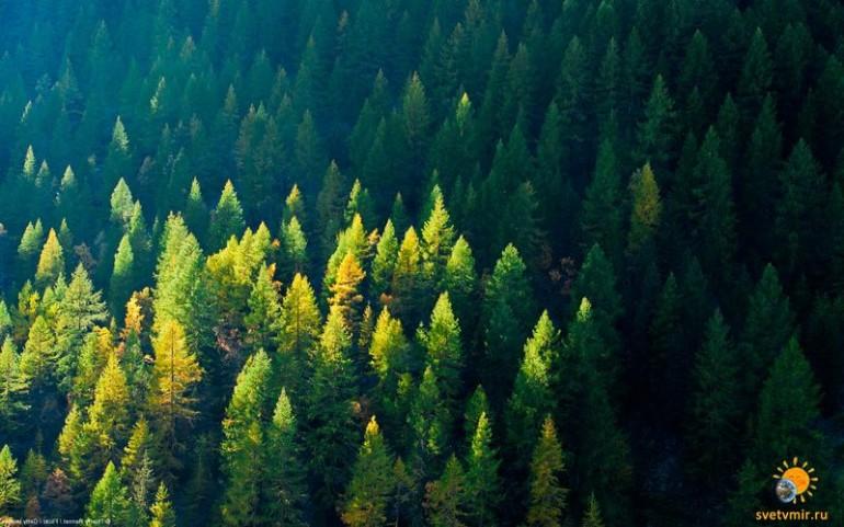 Лесотерапия или польза лесного воздуха