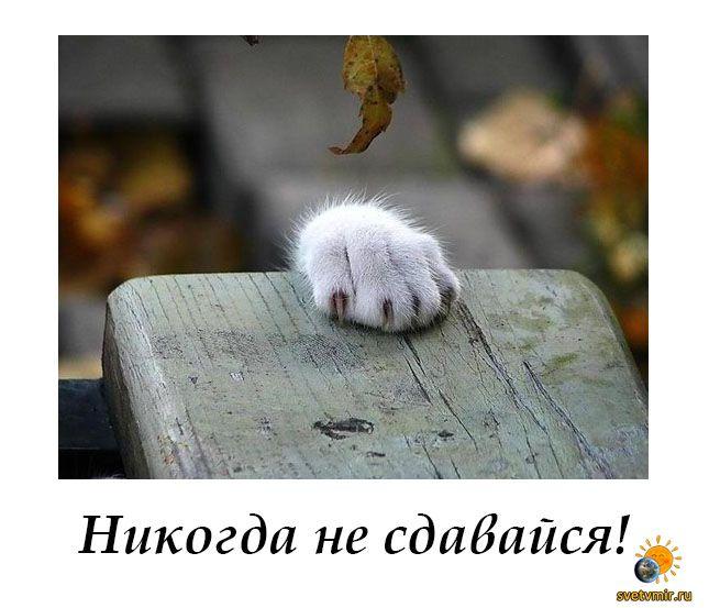 Bez imeni 1 - СветВМир.ру | Познавательный журнал! - Никогда не сдавайся!
