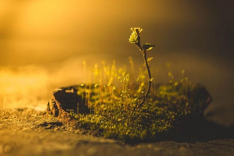 """""""При любой возможности отправляйтесь на природу. Отправляйтесь в сады, леса, горы, на реки и озера. Дышите свежим воздухом, любуйтесь чистым небом, слушайте пение птиц и шелест листьев. Подставьте тело целительным лучам солнца. Пребывание на природе возвышает и освежает разум"""".  Мринал Кумар Гупта"""