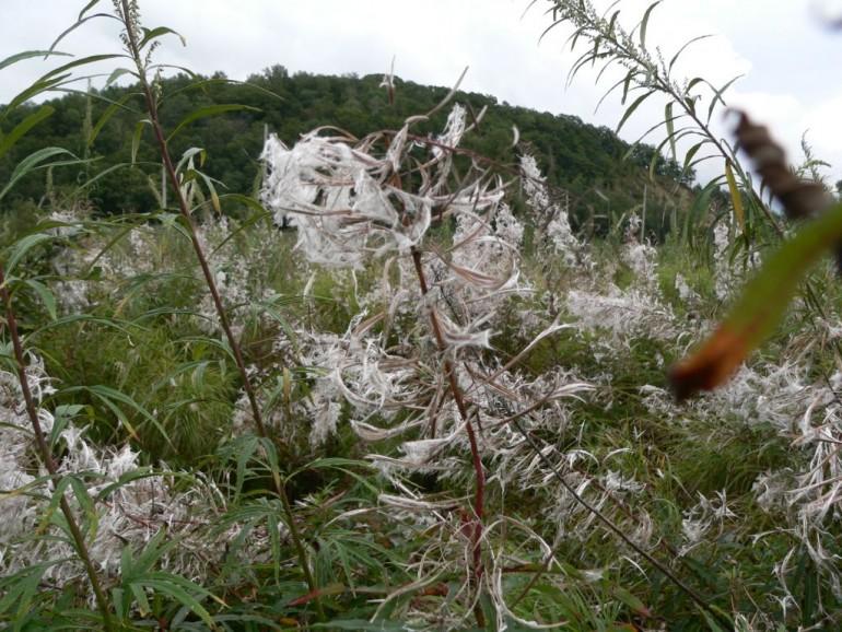 Как сделать матрас и подушку из крапивы, кипрея и других лечебных трав