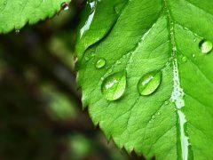 Растения для чистки, мойки и стирки