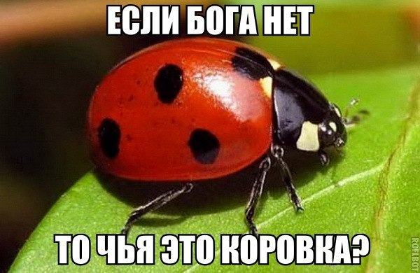 YgdyGyuXKI8